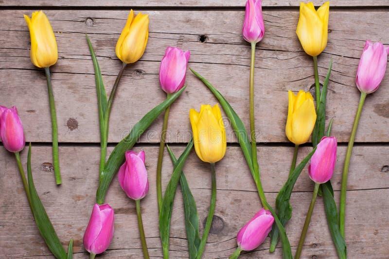Розовые и желтые цветки тюльпанов весны стоковое фото rf
