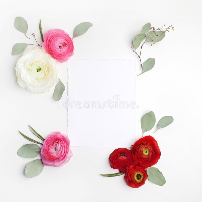 Розовые и красные листья лютика и зеленого цвета на белой предпосылке Плоское положение, взгляд сверху стоковые изображения