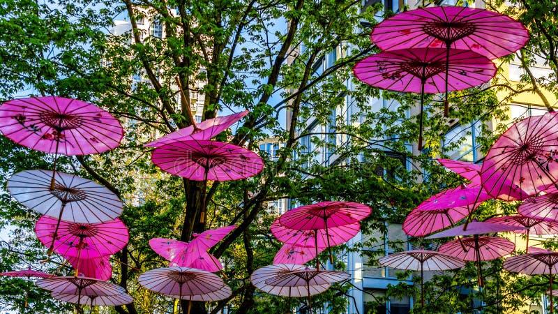 Розовые китайские зонтики или парасоли под сенью дерева в городке Ейль стоковые фото