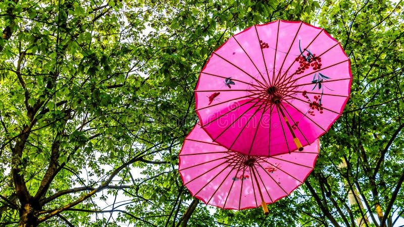 Розовые китайские зонтики или парасоли под сенью дерева в городке Ейль стоковые изображения