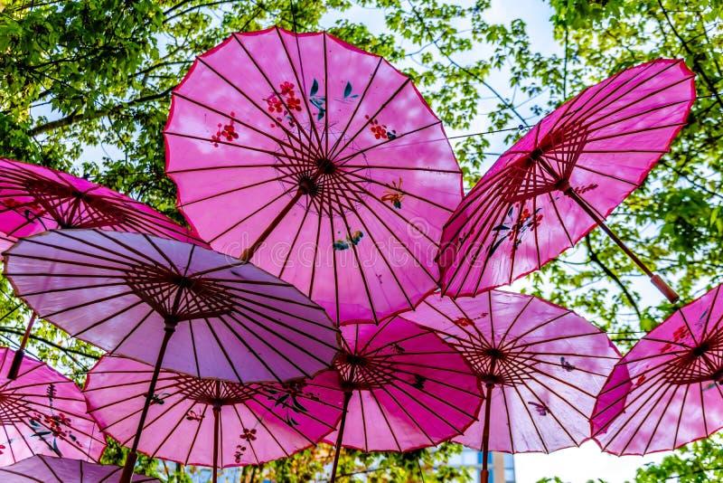 Розовые китайские зонтики или парасоли под сенью дерева в городке Ейль стоковое изображение rf