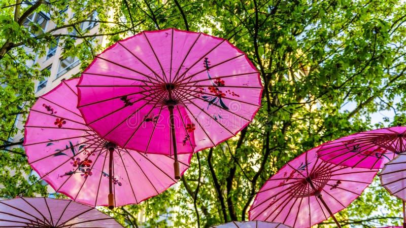 Розовые китайские зонтики или парасоли под сенью дерева в городке Ейль стоковое фото rf