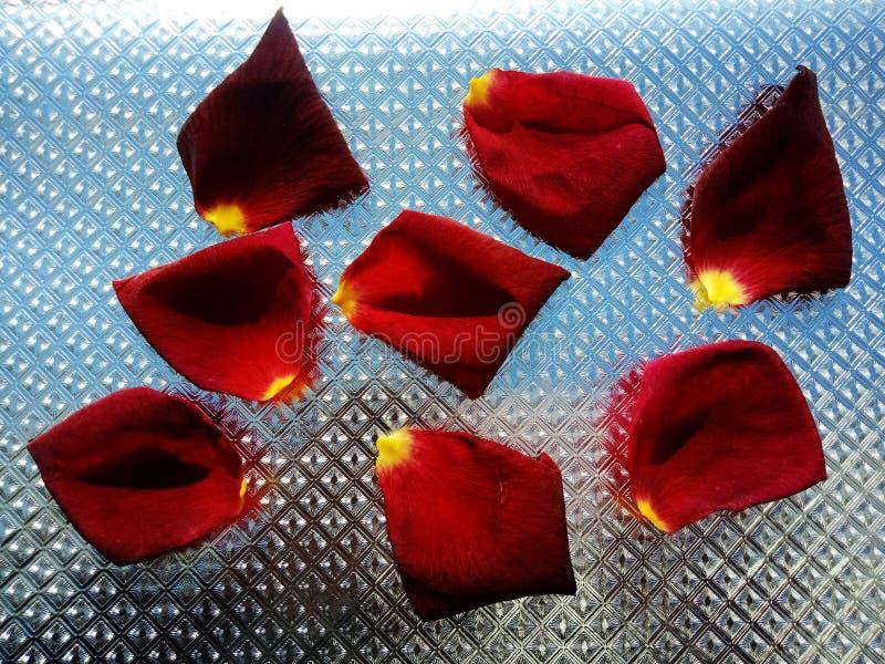 Розовые лепестки розы с серебряной текстурированной предпосылкой стоковые изображения rf