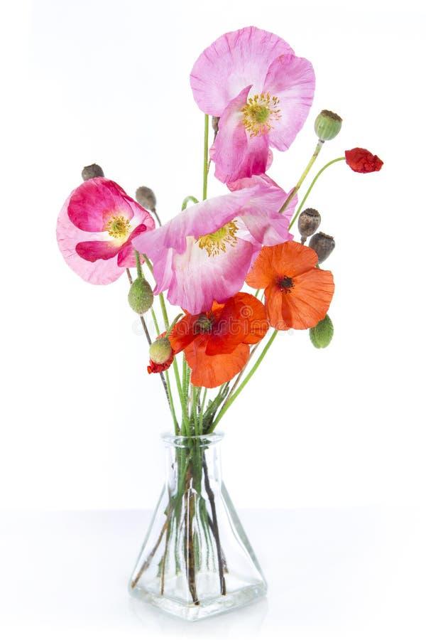 розовые маки красные стоковое изображение