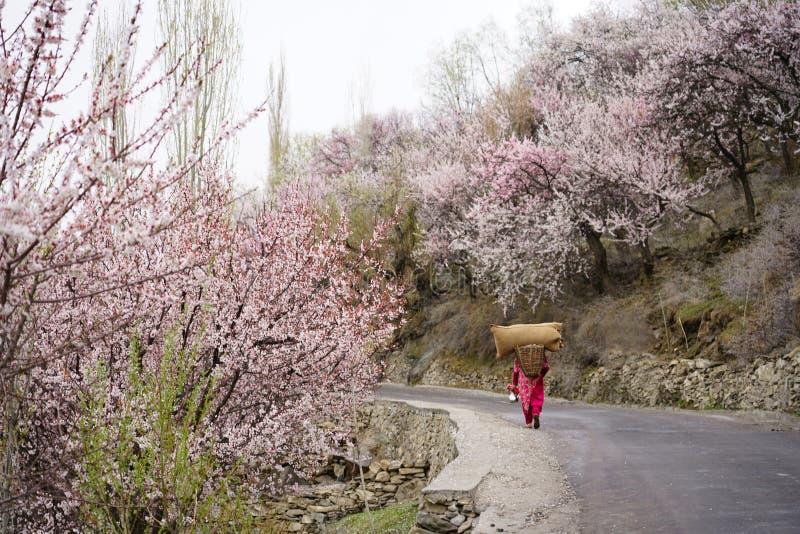 Розовые одевая сумка и корзина нося реднины максимальной допускаемой нагрузки женщины стоковые фото