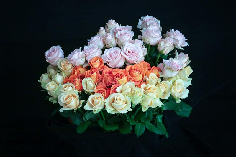 Розовые оранжевые белые розы Handbouquet с черными предпосылкой и деталью росы на розах делают розы смотрят настолько красивыми стоковые изображения