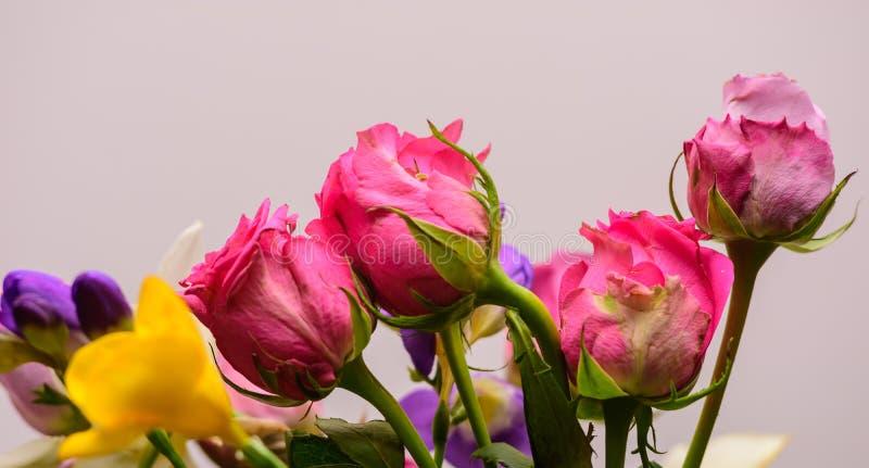 Розовые розы, весеннее время стоковое изображение