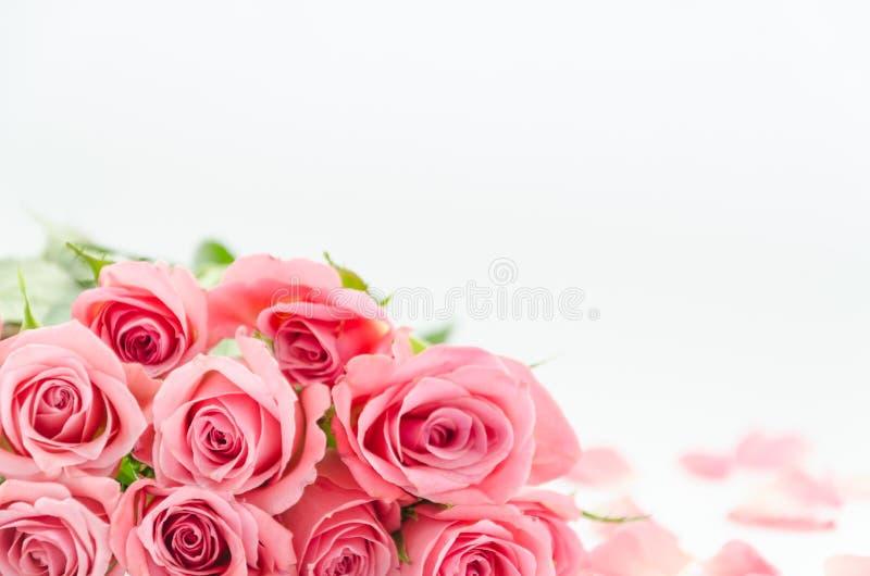 Розовые розы и лепестки розы на белой запачканной предпосылке с космосом экземпляра Близко вверх, цветки Модель-макет приглашения стоковые фотографии rf