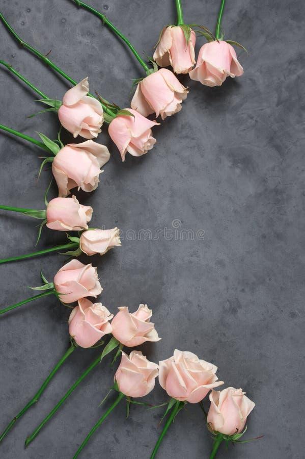 Розовые розы на серой предпосылке стоковые изображения
