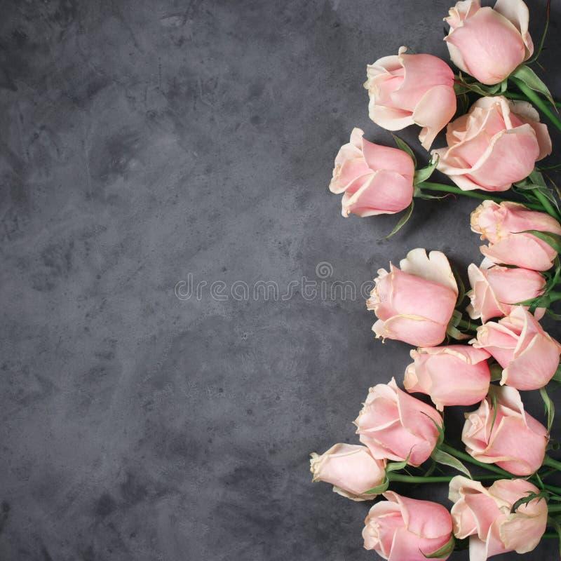 Розовые розы на серой предпосылке стоковое изображение