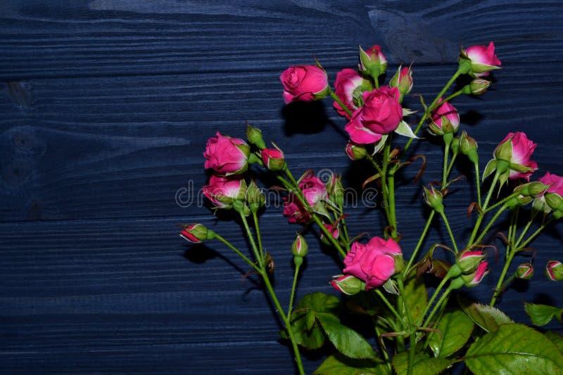 Розовые розы на синей деревянной предпосылке стоковые фото