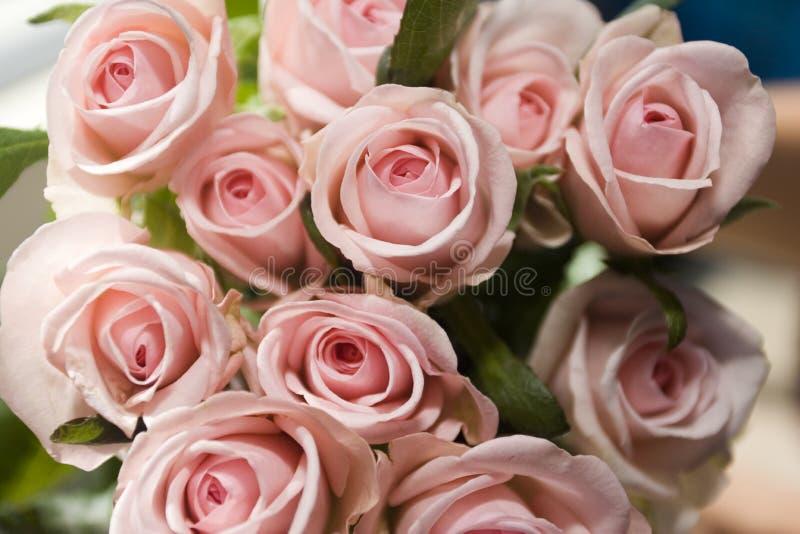 розовые розы стоковое изображение rf