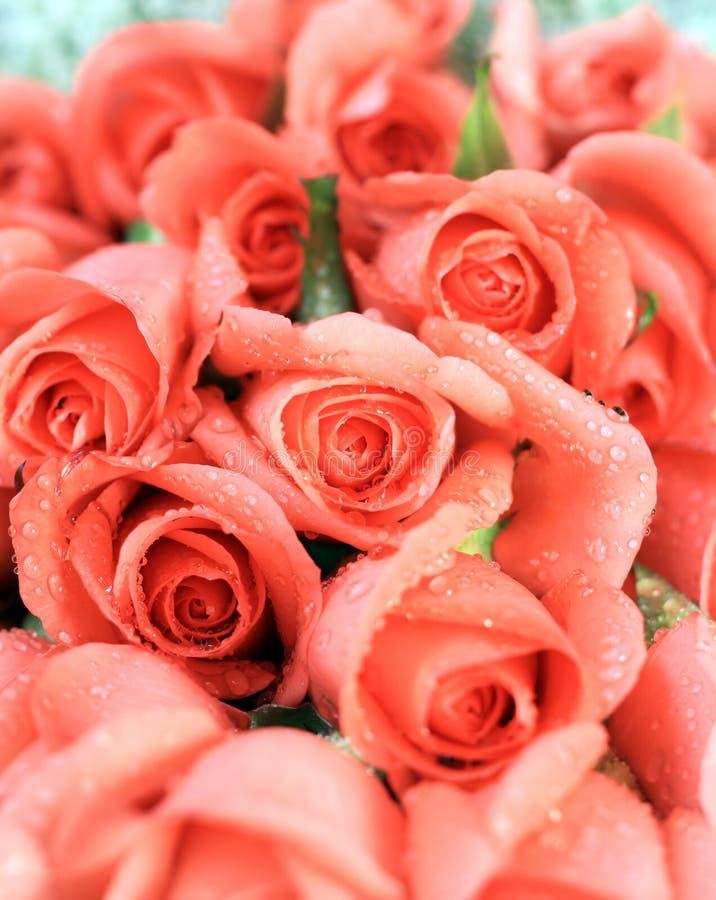 розовые романтичные розы стоковая фотография rf