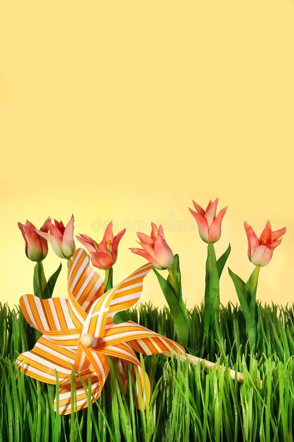 розовые тюльпаны весны стоковое фото