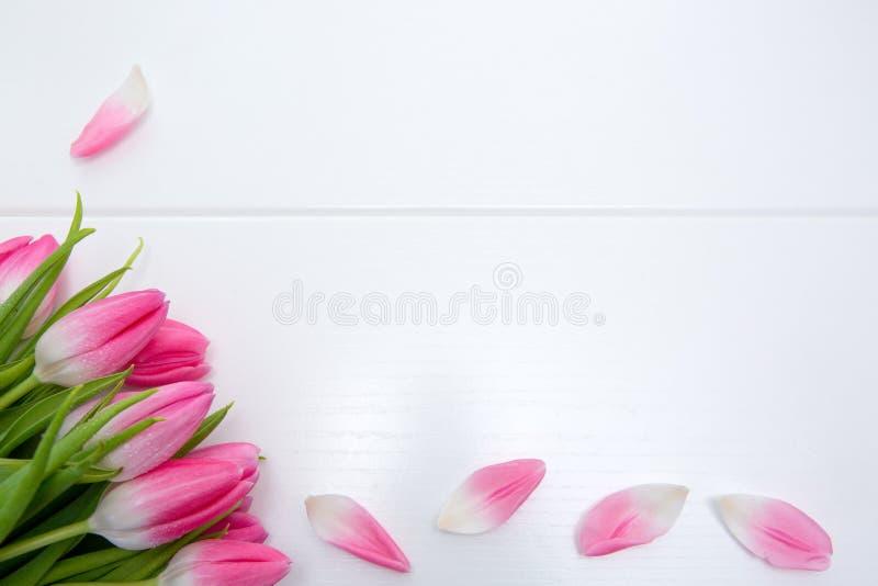 Розовые тюльпаны изолированные на белой деревянной предпосылке Предпосылка торжеств стоковые изображения rf
