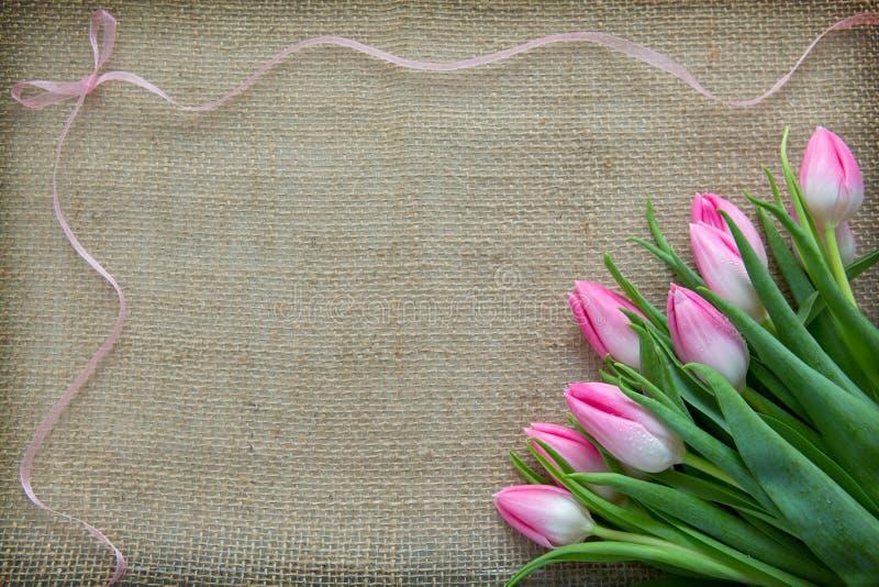 Розовые тюльпаны и петля изолированные на коричневой предпосылке ткани стоковая фотография rf
