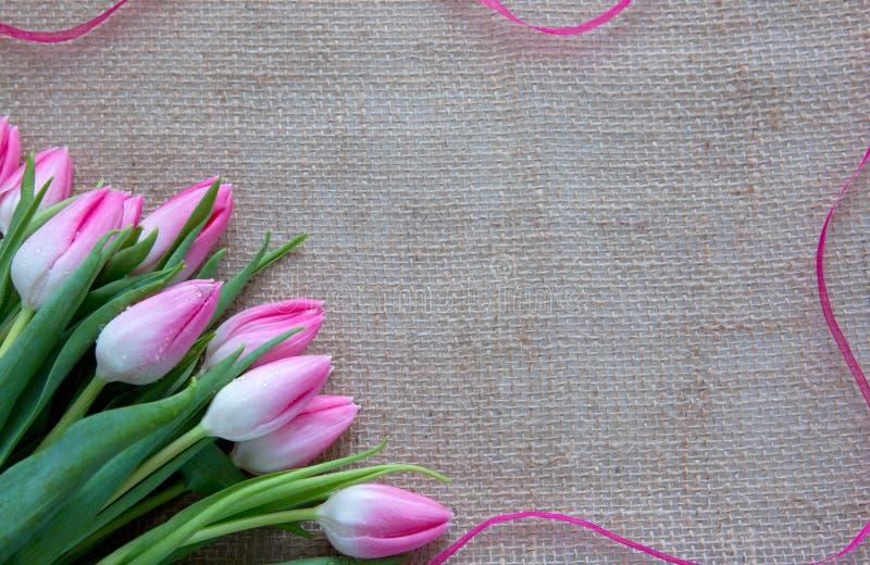 Розовые тюльпаны и петля изолированные на коричневой предпосылке ткани стоковое изображение