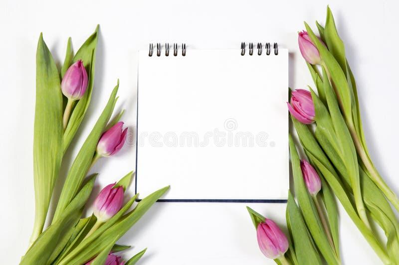 Розовые тюльпаны на белой предпосылке как открытка к дню ` s валентинки стоковая фотография