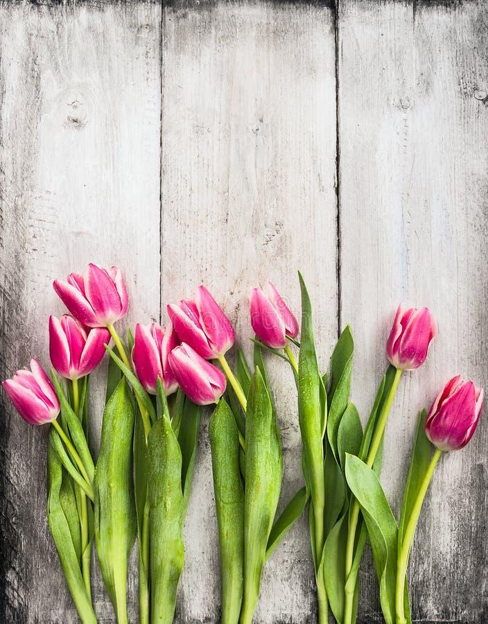 Розовые тюльпаны на предпосылке стены серой белизны деревянной стоковые фотографии rf