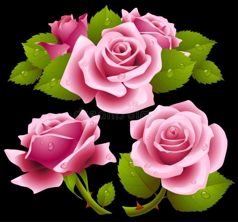 розовые установленные розы иллюстрация вектора