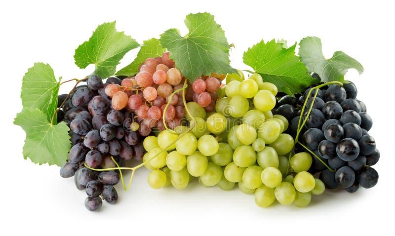 Розовые, фиолетовые и зеленые виноградины изолированные на белой предпосылке стоковое изображение rf