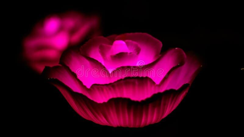 Розовые фонарики, часть красоты и установка зверя на фестиваль света стоковые изображения