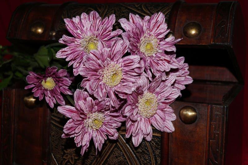 Розовые хризантемы стоковые фотографии rf