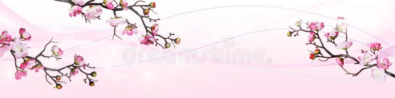 Розовые цветки вишни изолированные на белой предпосылке иллюстрация штока