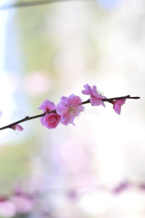Розовые цветки на запачканной предпосылке стоковые изображения
