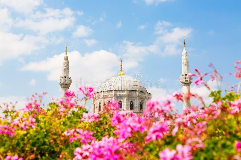 Розовые цветки с мечетью султана Pertevniyal Valide, мечеть Ottoman имперская в Стамбуле, Турции День лета солнечный с голубыми c стоковое фото