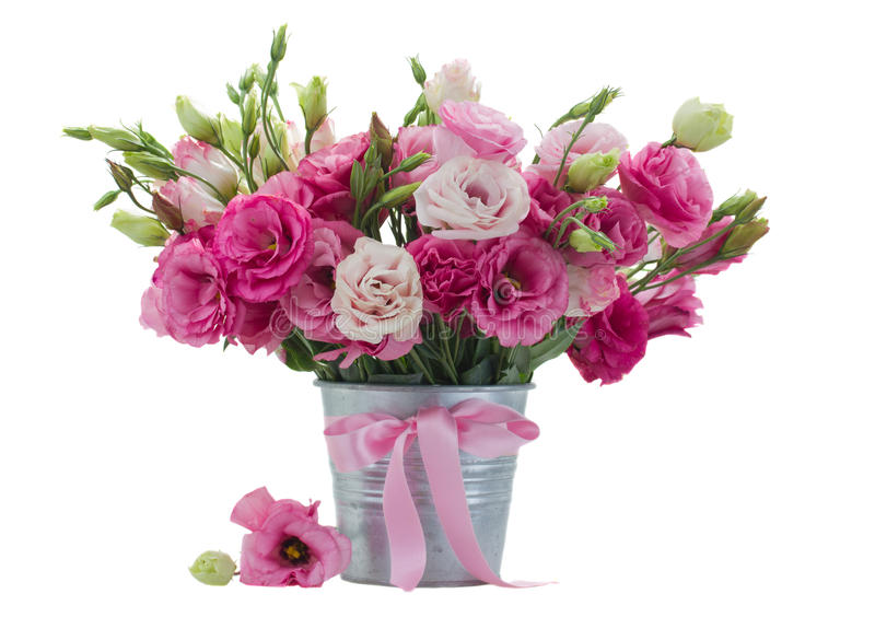Розовые eustomas в цветочном горшке стоковые изображения