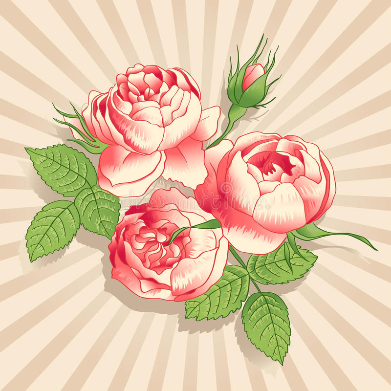 Розовые peonies на светлой предпосылке иллюстрация вектора