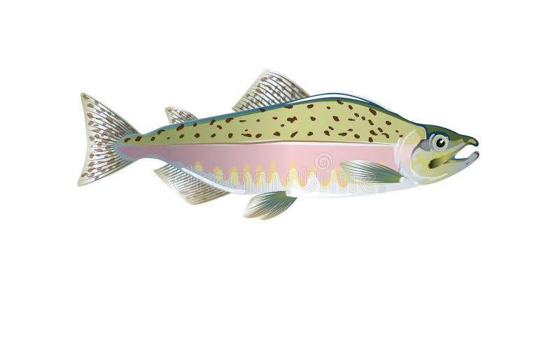 Розовые salmon рыбы Vector иллюстрация оптимизированная от быть использованным в малых размерах в комплексном конструировании, ук иллюстрация штока