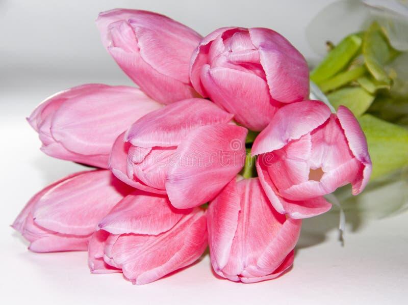 Розовый букет тюльпана стоковые изображения rf
