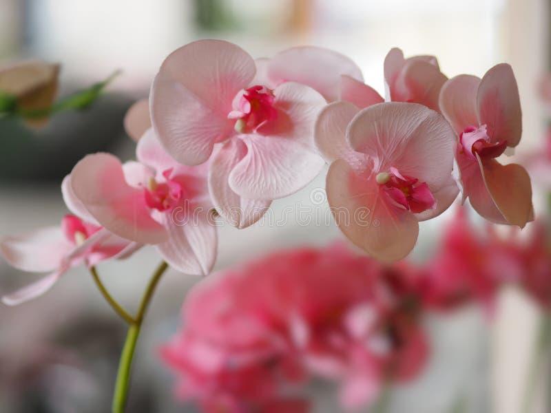 Розовый букет цветка орхидеи красивый на запачканный предпосылки стоковые фото