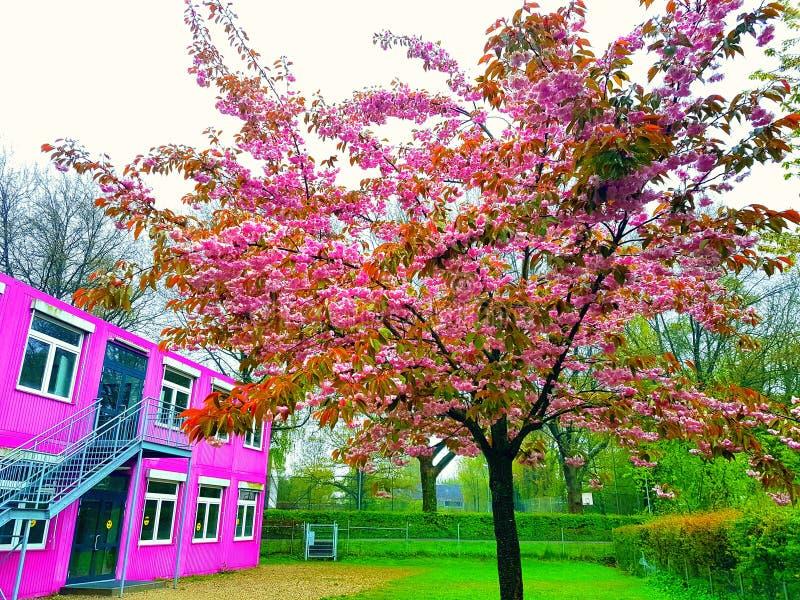 розовый вал стоковое фото rf
