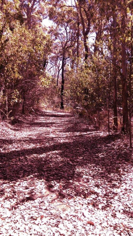 Розовый лес стоковая фотография rf