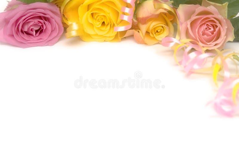 розовый желтый цвет роз стоковое фото rf