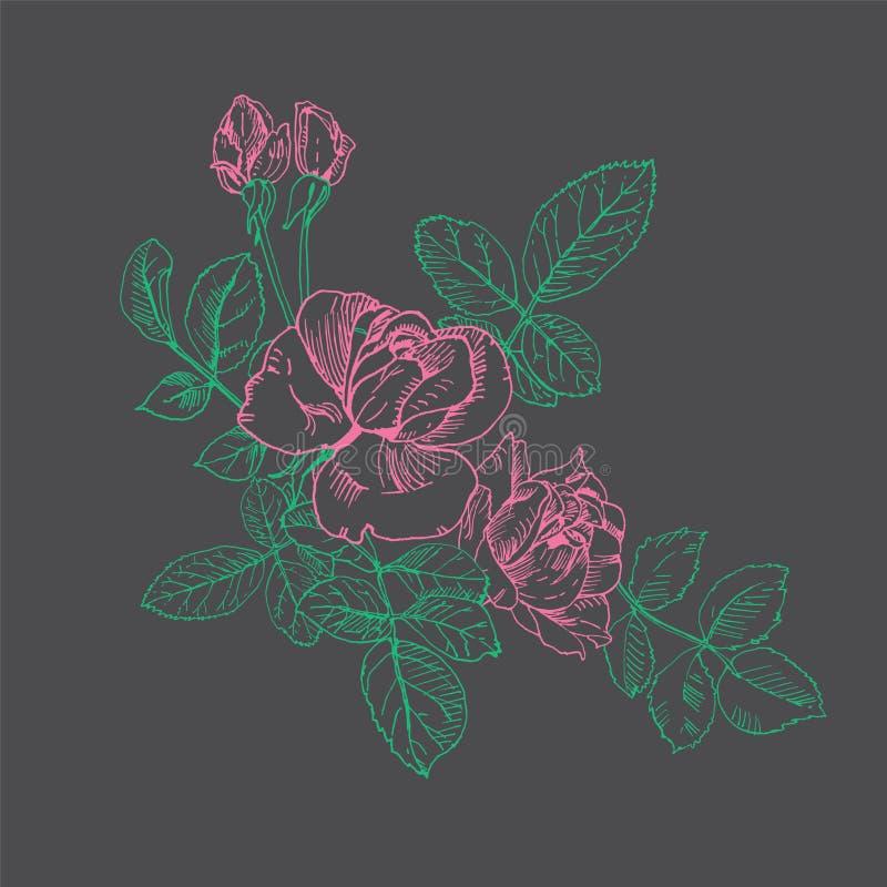 Розовый завод с набором цветков Вектор руки вычерченный розовый, мел на классн классном Бутоны, листья, стержень иллюстрация штока