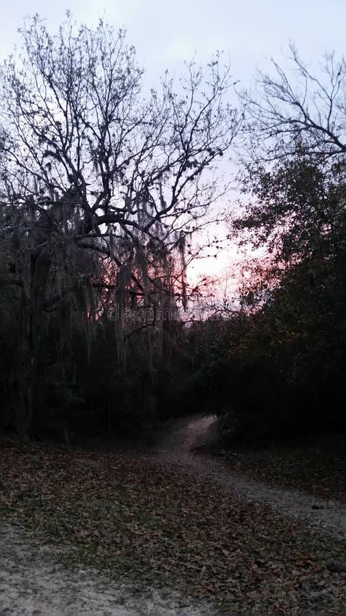 Розовый заход солнца в Хьюстоне, Техасе стоковое фото