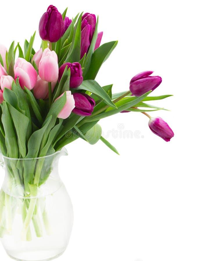 Розовый   и фиолетовый конец букета тюльпанов вверх стоковое фото rf