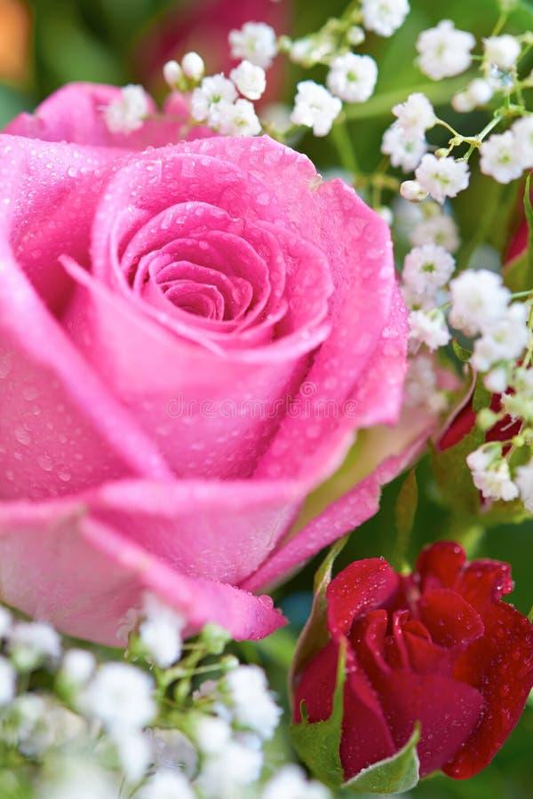 Розовый крупный план стоковые фотографии rf