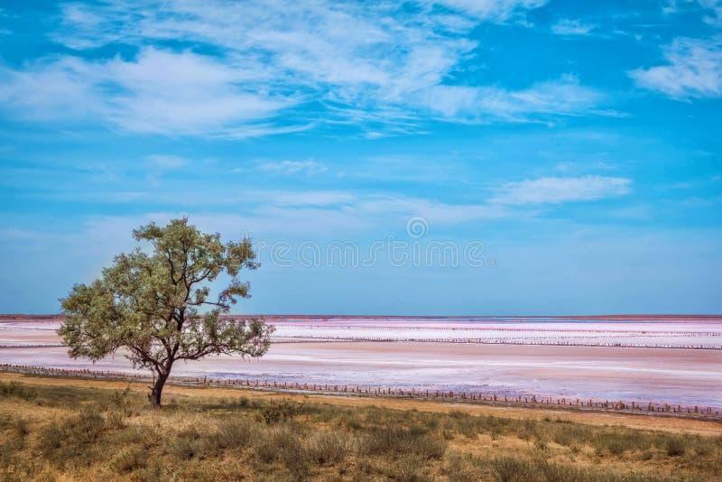 Розовый ландшафт береговой линии озера соли стоковые изображения