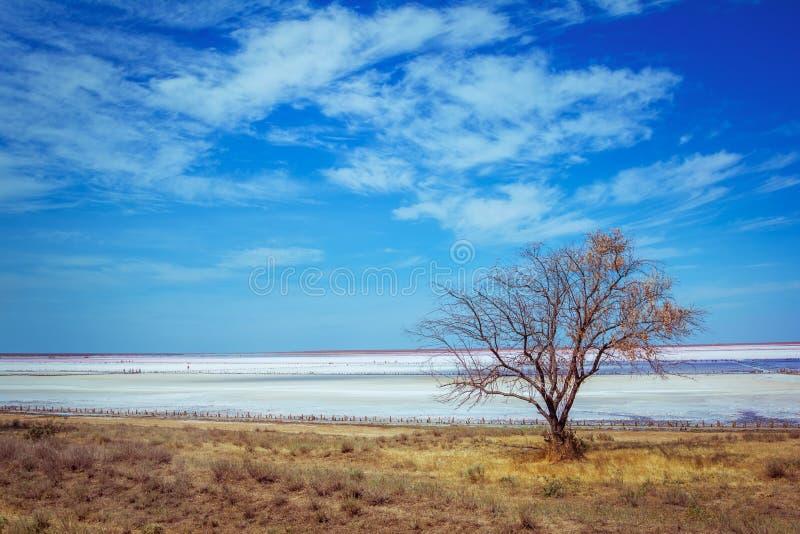 Розовый ландшафт береговой линии озера соли стоковое изображение