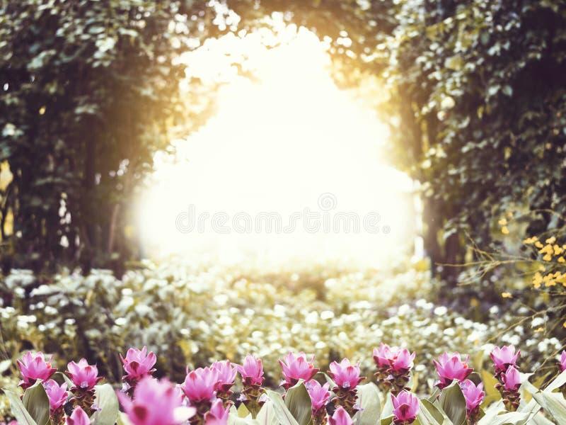 Розовый малый цветок в парке на заходе солнца стоковая фотография rf