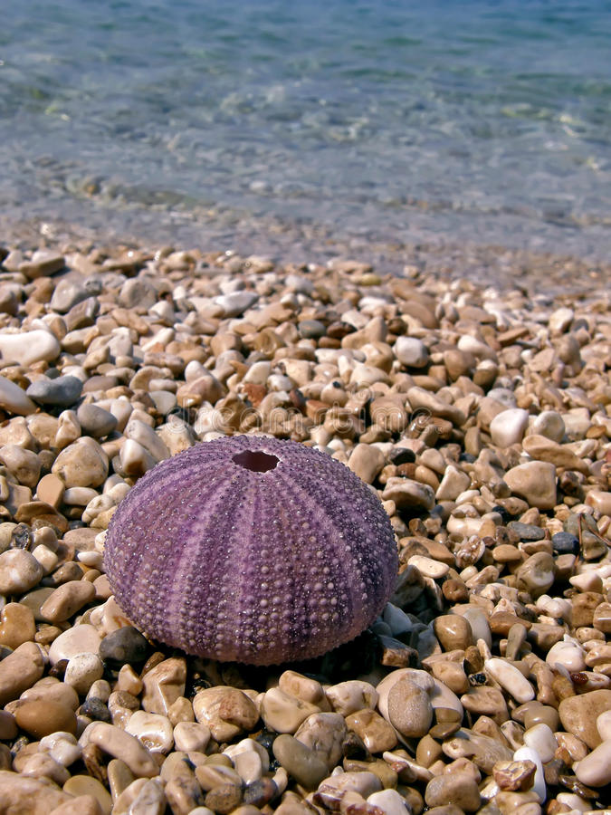 розовый мальчишка моря стоковое изображение rf
