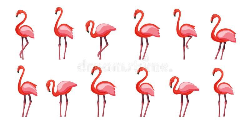 Розовый набор фламинго, иллюстрация вектора изолированная на белой предпосылке иллюстрация вектора