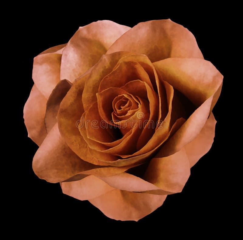Розовый оранжевый цветок на черноте изолировал предпосылку с путем клиппирования Отсутствие теней closeup стоковое изображение rf