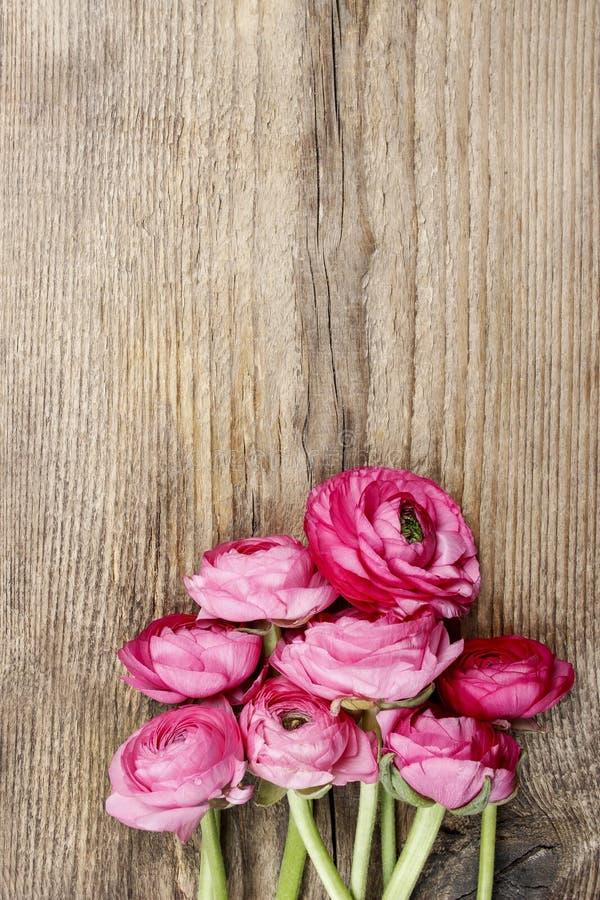 Розовый персидский цветок лютика (лютик) стоковые изображения