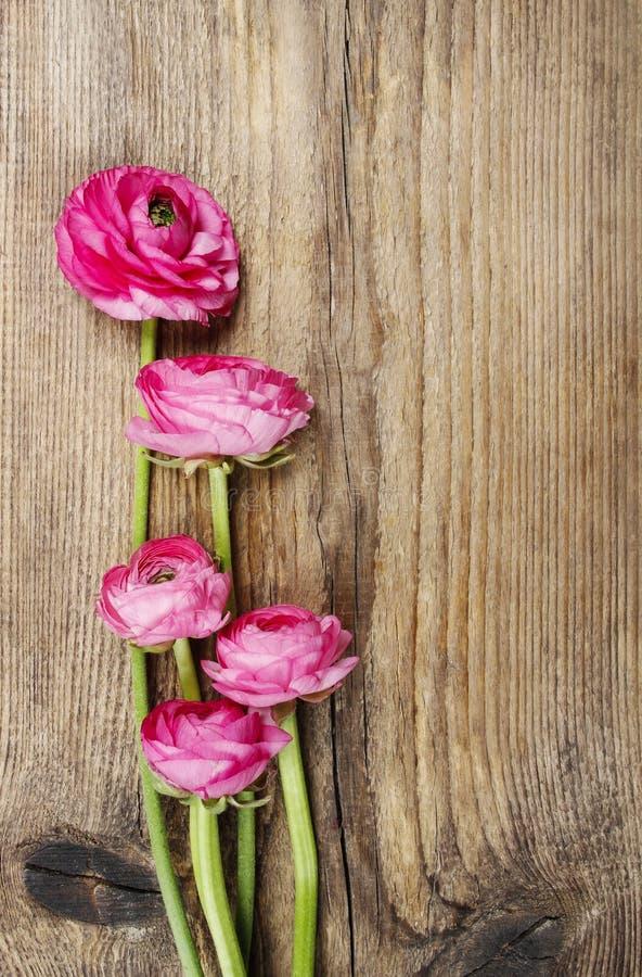 Розовый персидский цветок лютика (лютик) стоковые фотографии rf